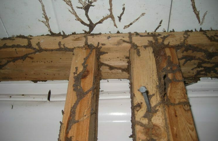Understanding Termite Damage And Treatment